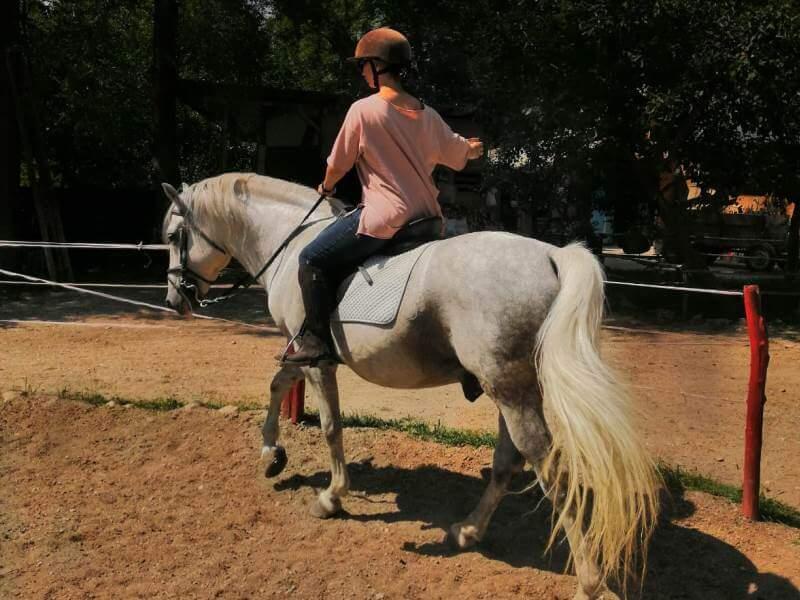 Scoala echilibrului total pe cal
