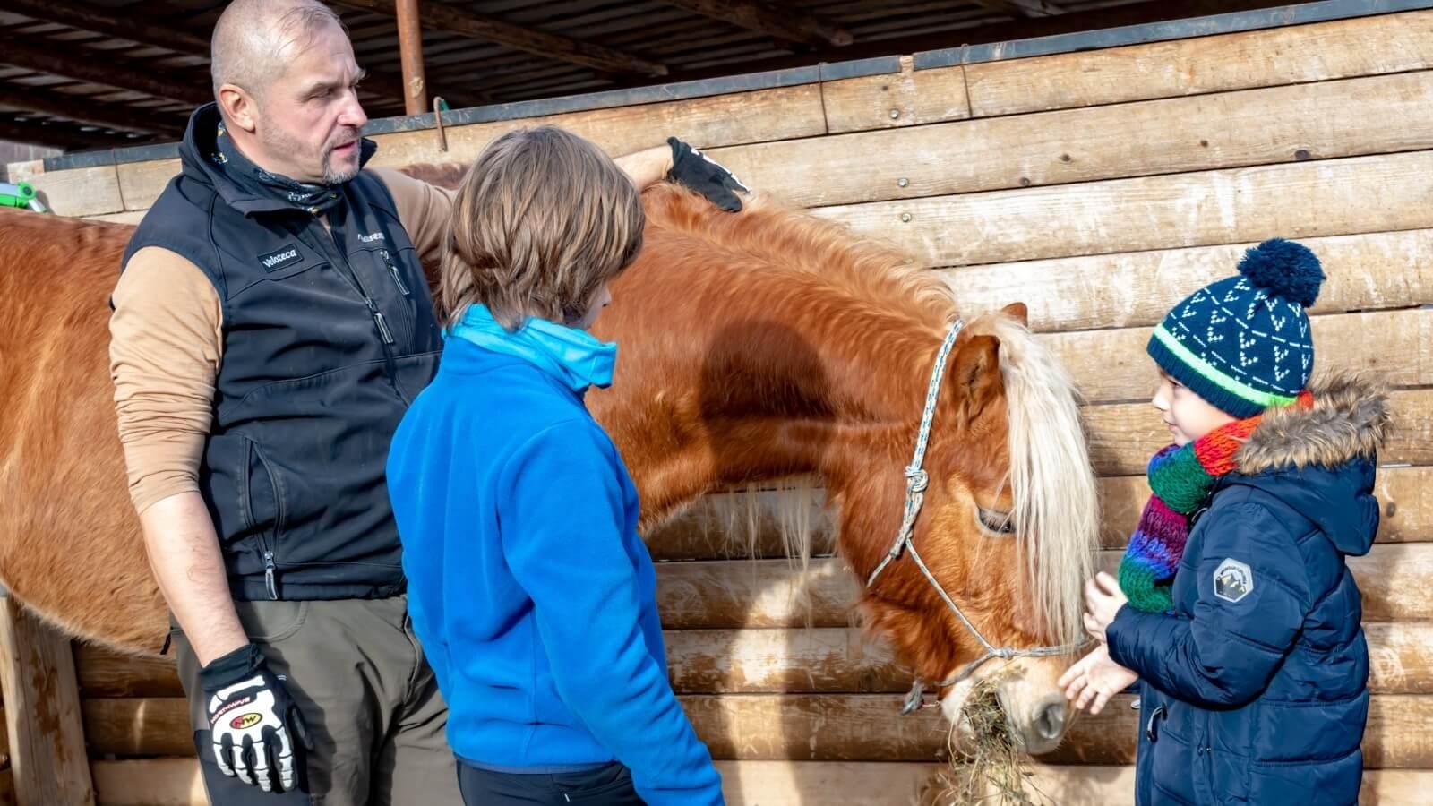 siguranta la grajdul cailor