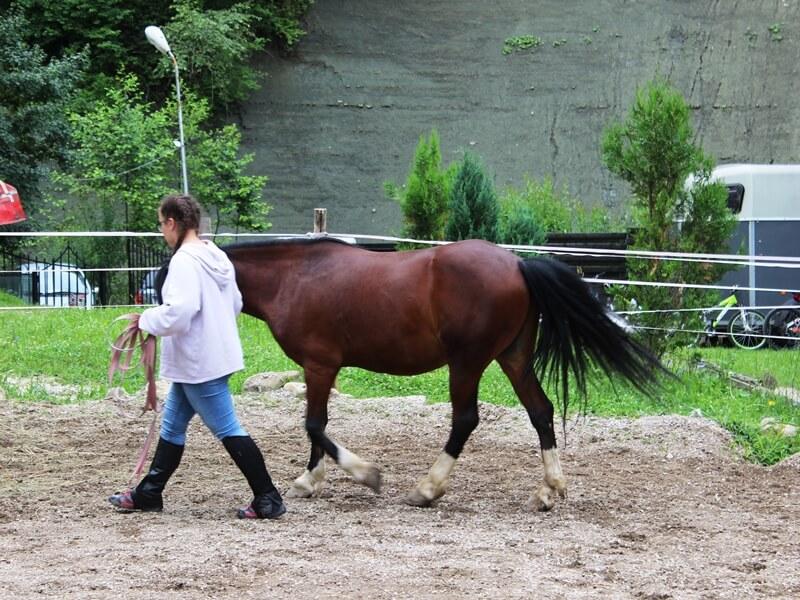 plimbare cu calul la pas