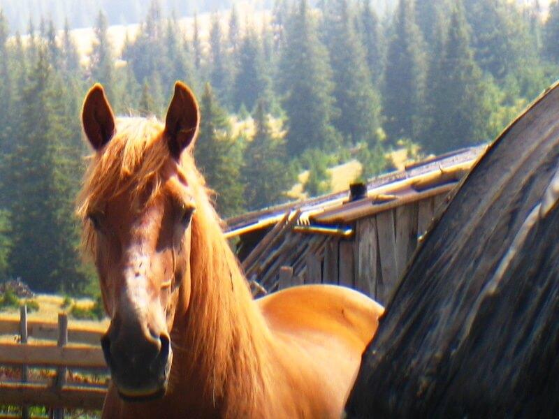 cal din Tara Motilor