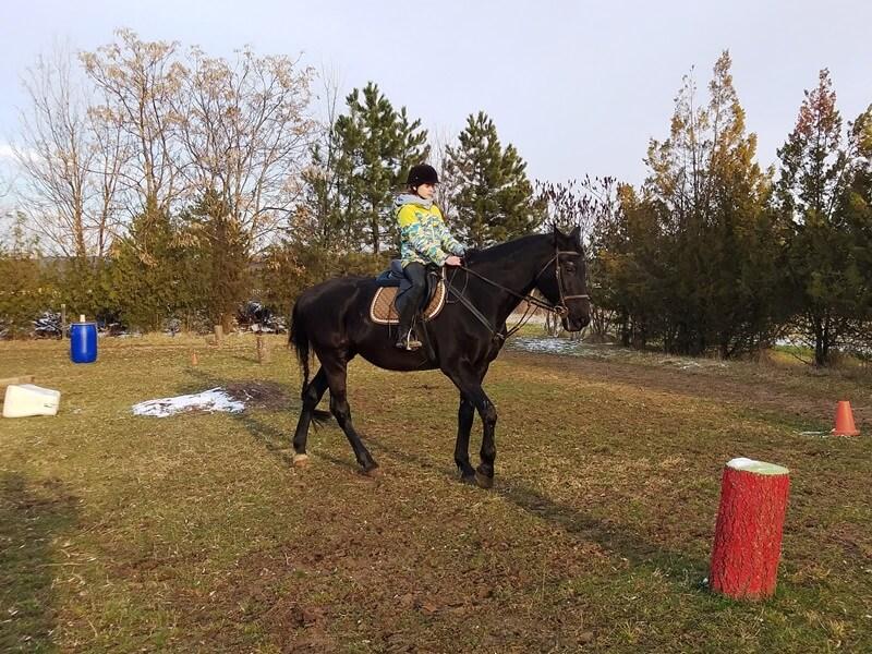 scoala batesaua_working equitation