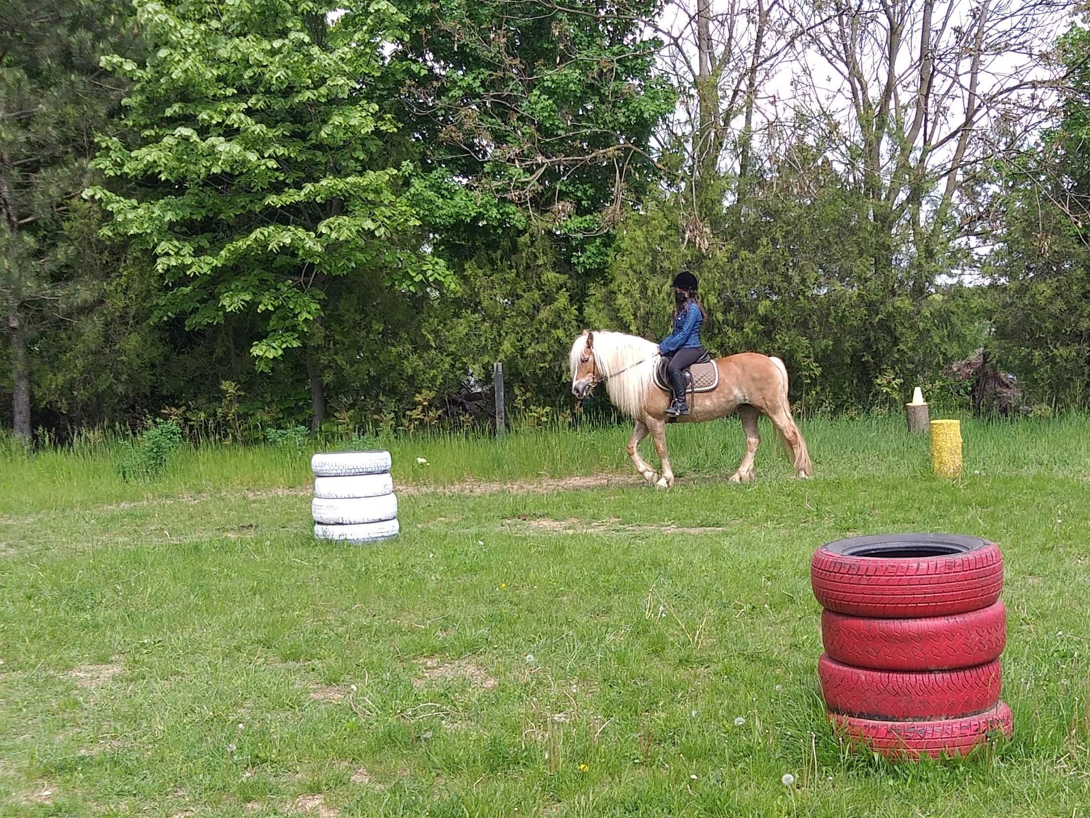 working equitation training